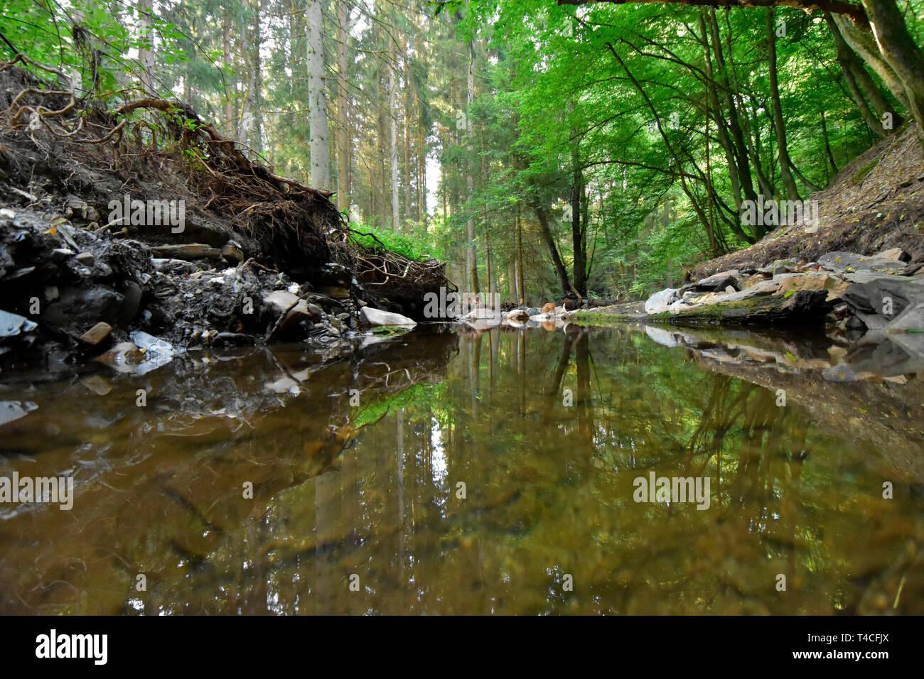 Traumschleife, Charcoal Burner Premium Hiking Path, Germany, Rhineland-Palatinate, Hunsrueck, Köhlerpfad - Stock Image
