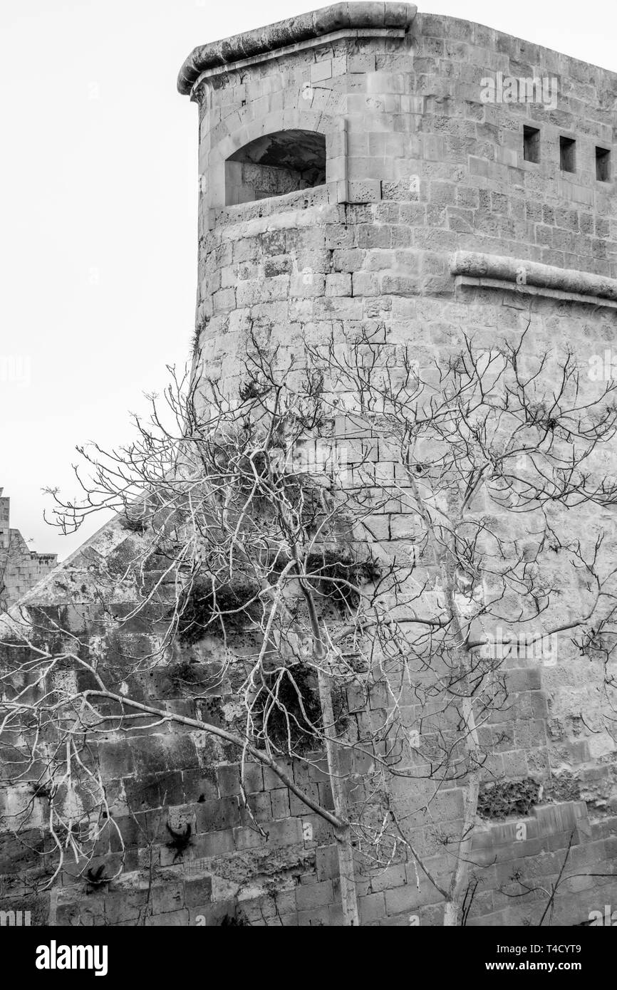 Valletta in Malta fortified wall construction partial view with a leafless tree, black and white photography - Stock Image