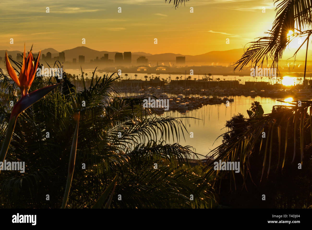 Calm bright sunrise over the San Diego skyline, with North San Diego Bay and docked sailboats off Shelter Island, California, USA Stock Photo