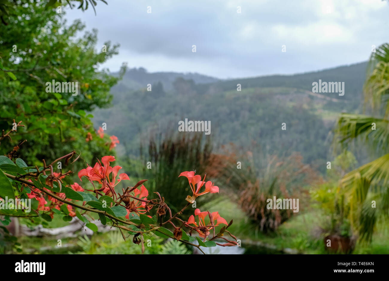 Hillside garden with lily pond and mountain view in Sedgefield, Garden Route, South Africa. - Stock Image