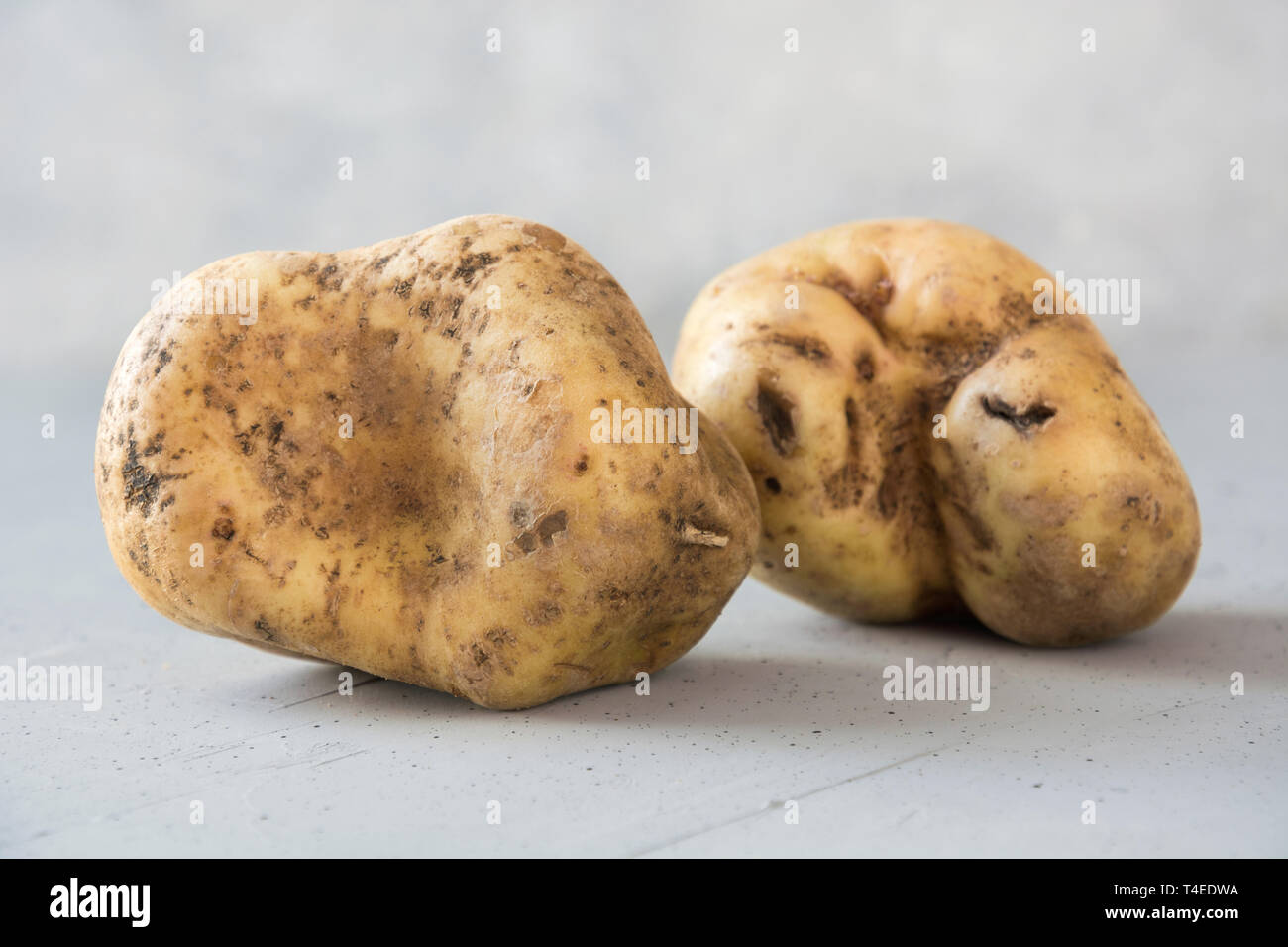 Ugly organic abnormal potatoes. Concept organic vegetables. Close up. Stock Photo