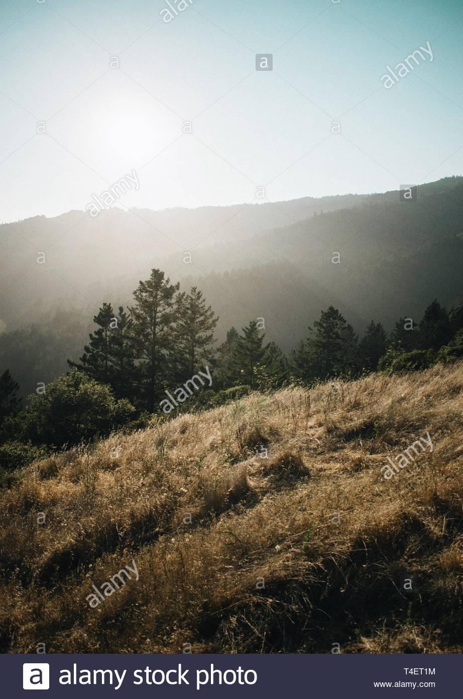 tree tops between hills - Stock Image