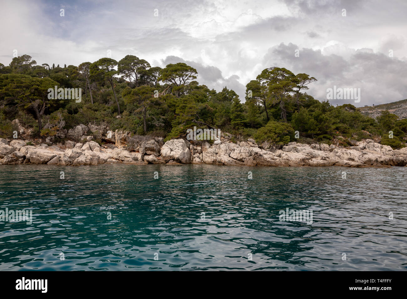 Trees and nature at Lokrum Island Coast, Dubrovnik, in Croatia - Stock Image