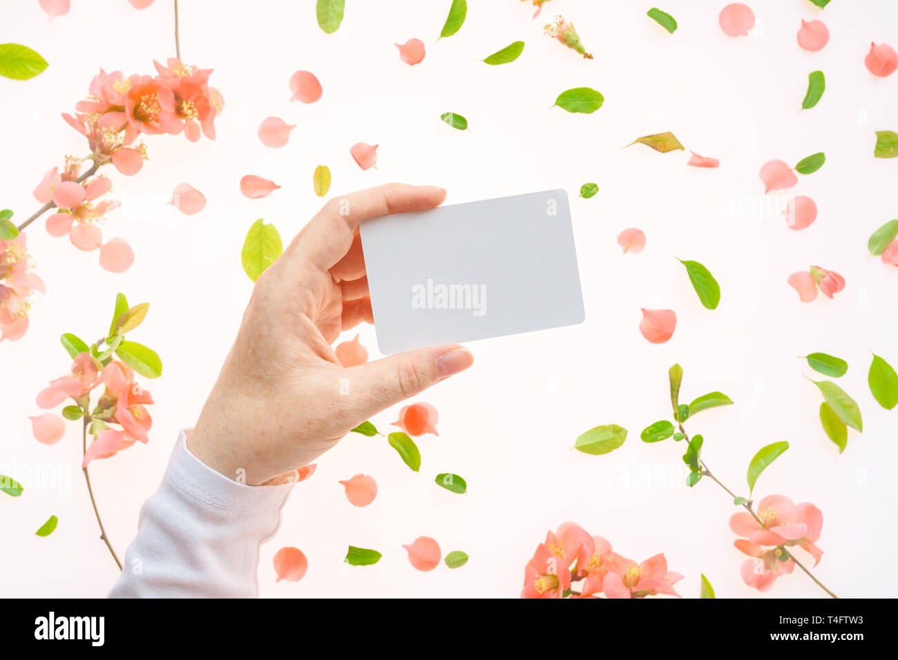 Woman holding blank white business card mock up in hand over white background with blooming springtime flower petals and leaves Stock Photo