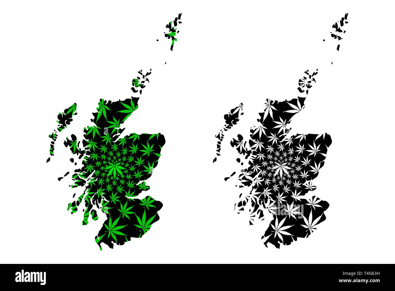Scotland - map is designed cannabis leaf green and black, Scotland map made of marijuana (marihuana,THC) foliage, - Stock Vector