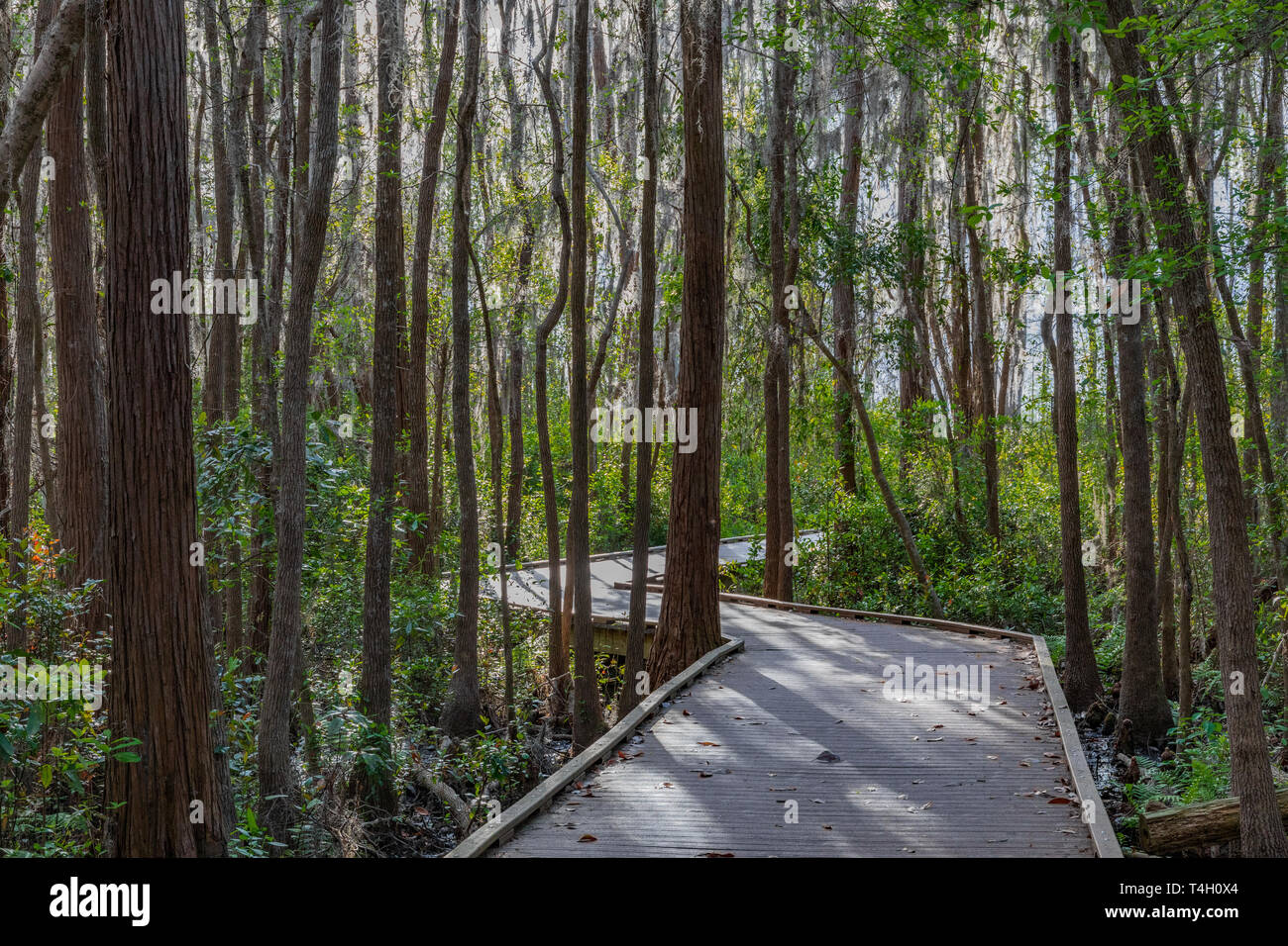 Okefenokee Swamp Folkston, GA, USA-3/30/19: A walkway through the eastern side of the Okefenokee swamp. Stock Photo
