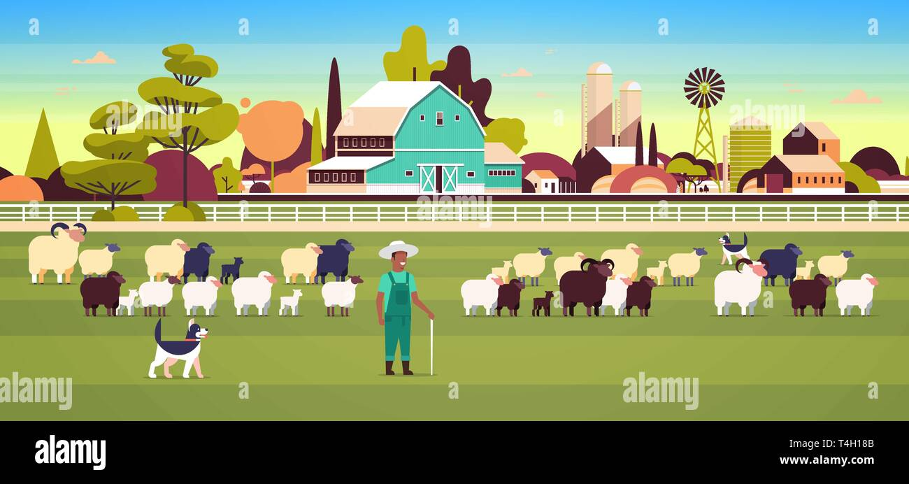 shepherd with stick and dogs herding flock of white black sheeps african american male farmer breeding sheep wool farm concept field farmland - Stock Vector