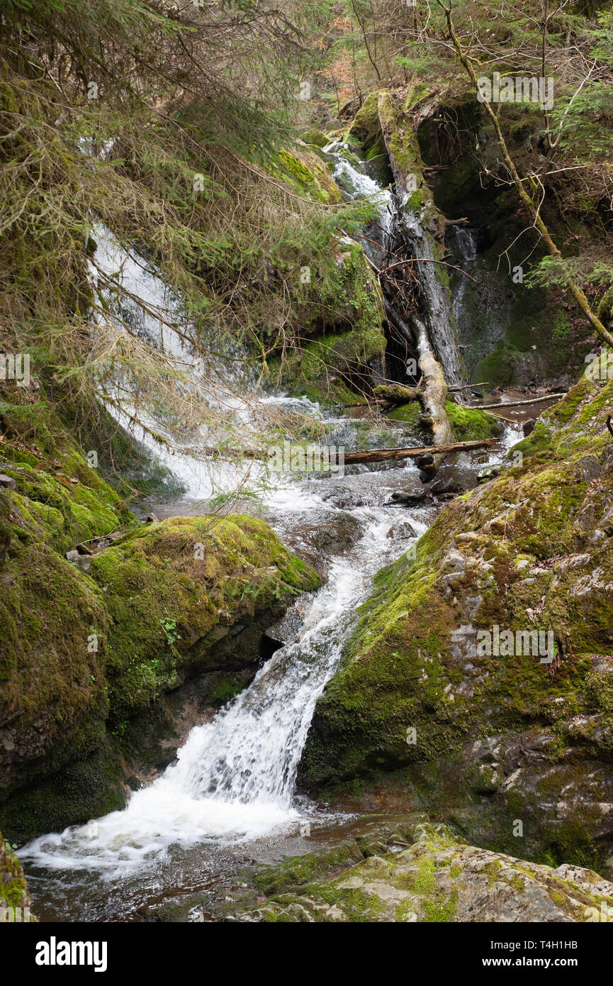 forest waterfalll, in early spring, Wutachschlucht Gorge, Black Forest, Germany - Stock Image