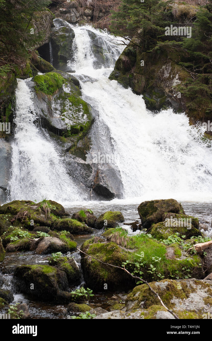 Triberg Falls, Triberger Wasserfalle, waterfall in spring, Triberg, Black Forest, Germany - Stock Image