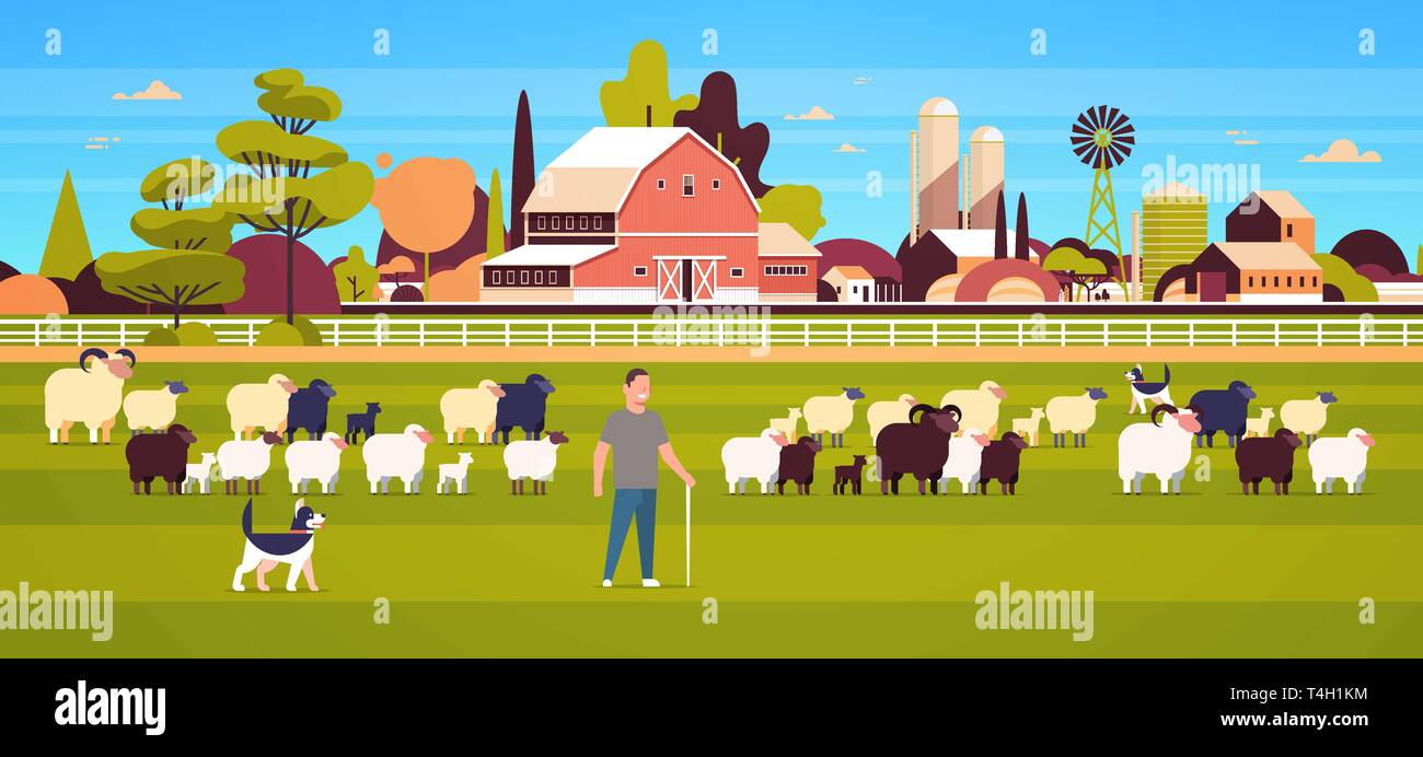 shepherd with stick and dogs herding flock of white black sheeps male farmer breeding sheep wool farm concept field farmland countryside landscape - Stock Vector
