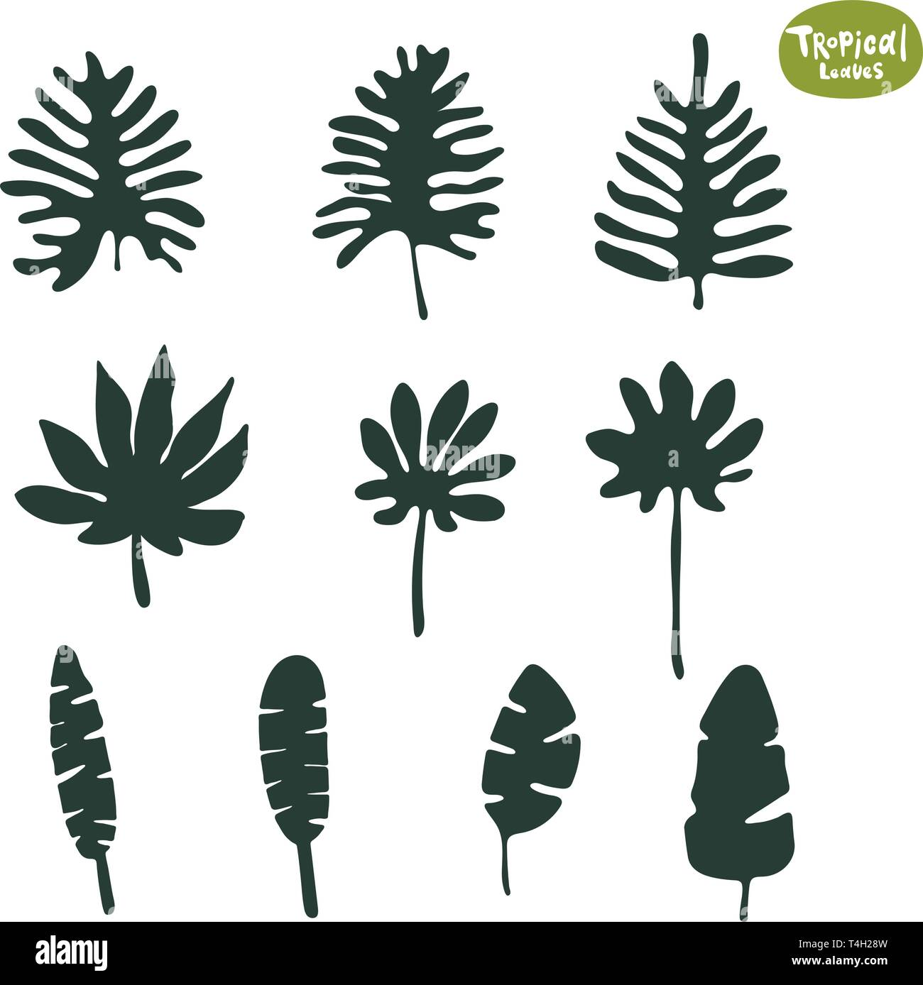 Tropical Doodle Leaves Collection Set Of Vector Isolated Silhouettes On White Background Stock Vector Image Art Alamy This set of watercolor tropical leaf illustrations is perfect for creating summer wall art, wedding invitations, birthday cards and so much more! alamy
