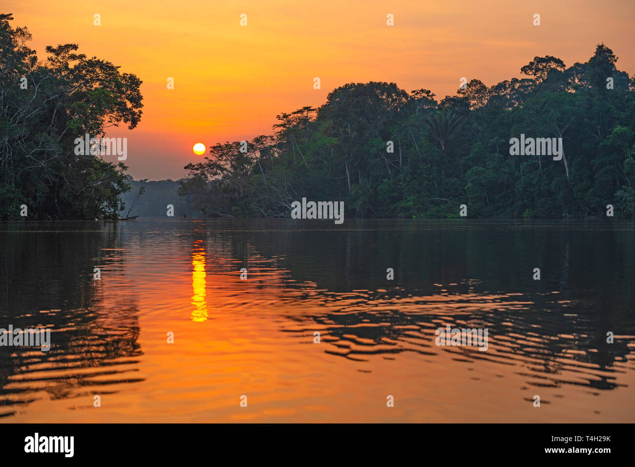 Sunset Reflection in Yasuni national park. The Amazon river basin is found in Brazil, Bolivia, Colombia, Ecuador, Guyana, Suriname, Peru and Venezuela. - Stock Image