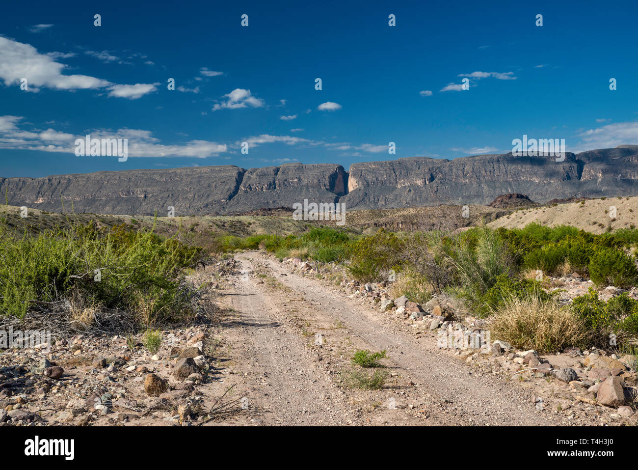 River Road, Sierra Ponce mesa in Mexico in distance, Chihuahuan Desert borderland, Big Bend National Park, Texas, USA Stock Photo