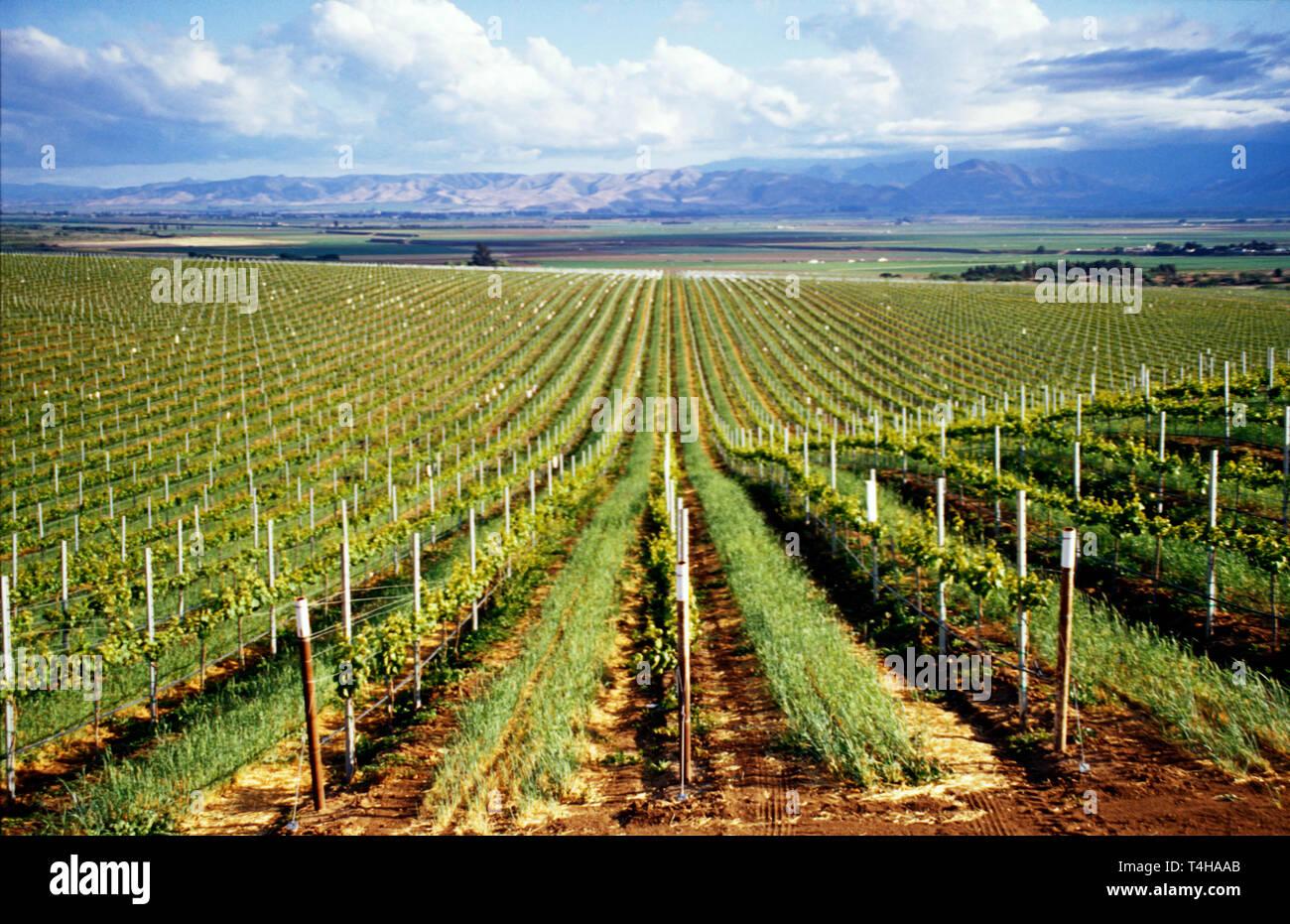 California Monterey County Soledad vineyard view from Highway Salinas Valley beyond - Stock Image