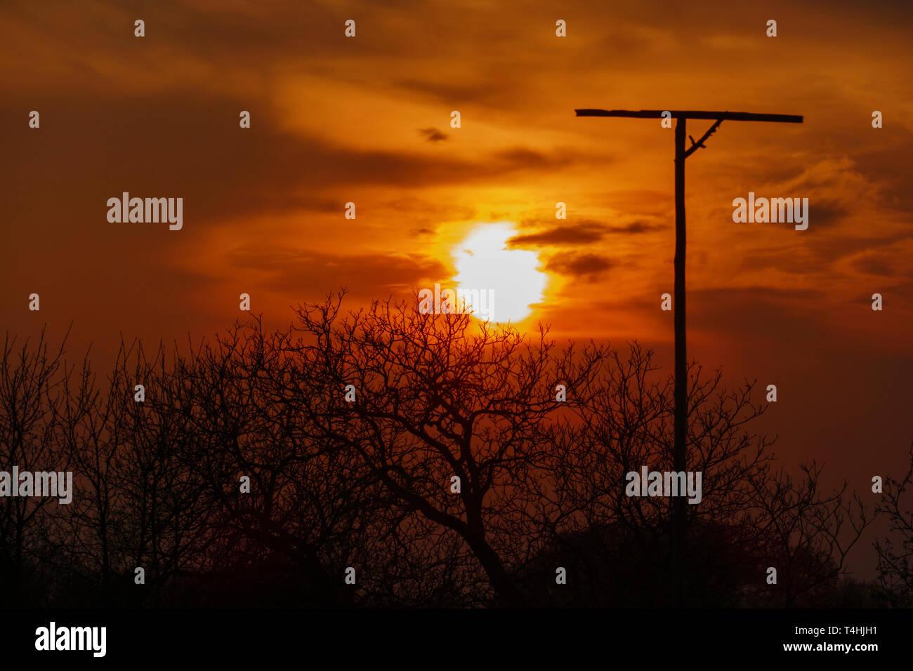 Ansitzstange für Greifvögel im Sonnenuntergang mit Silhouette von Bäumen - Stock Image