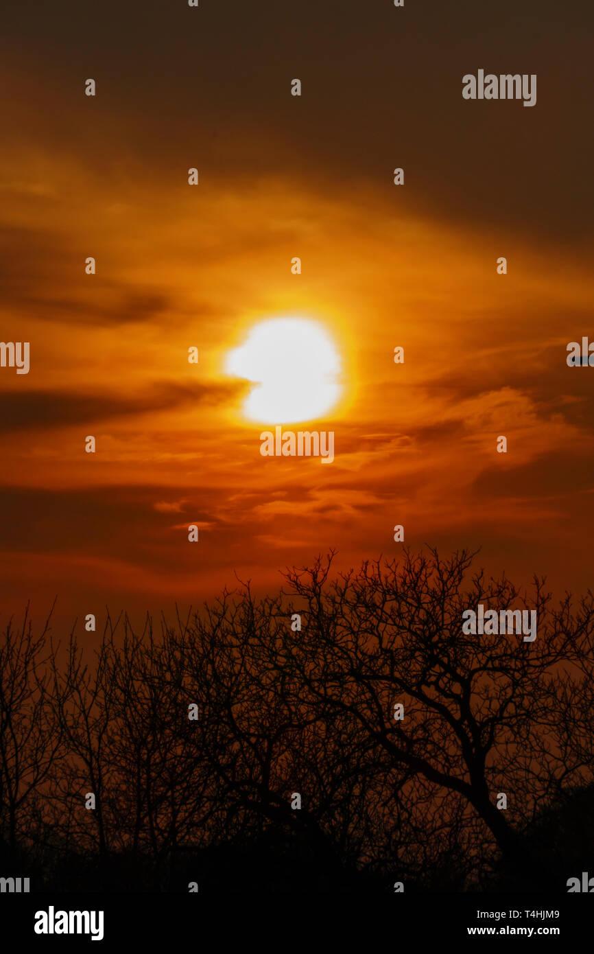 Abendrot, Sonnenuntergang mit Silhouette von Bäumen Stock Photo