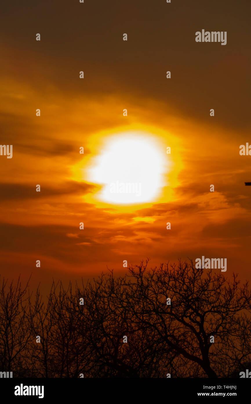 Abendrot, Sonnenuntergang mit Silhouette von Bäumen - Stock Image
