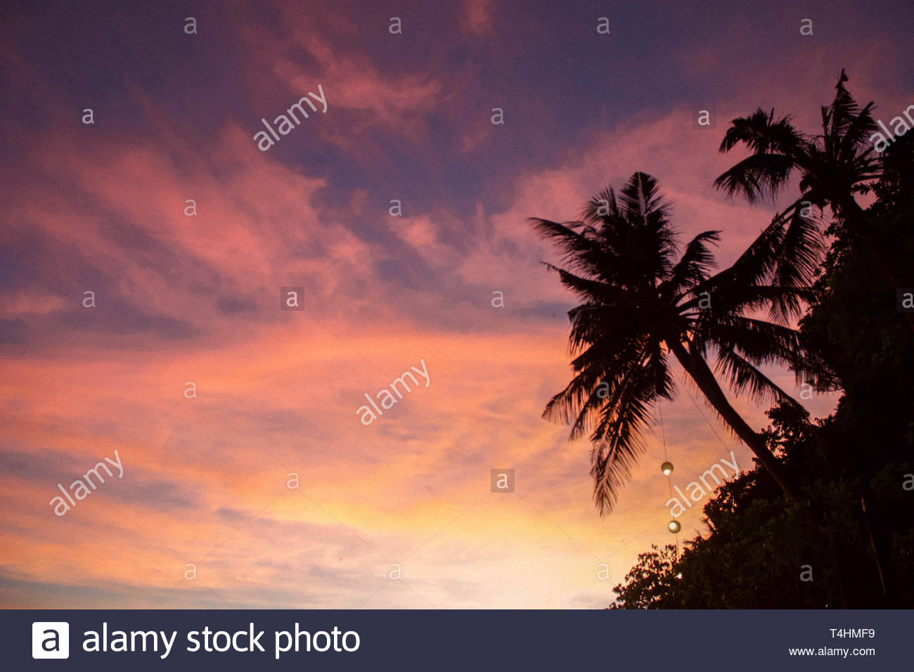 wispy clouds over palms - Stock Image