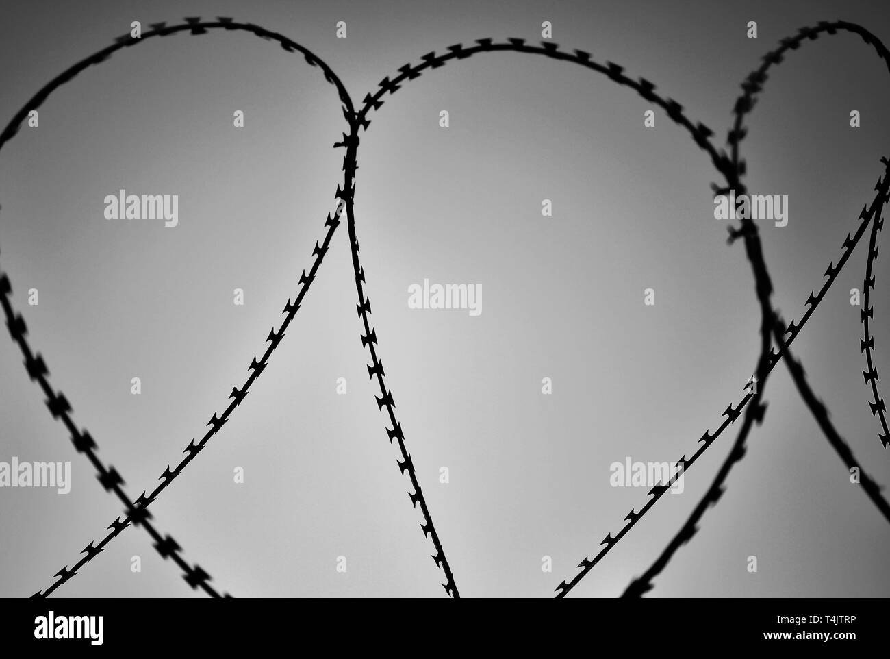 Part of the barbed wire fence close-up. The concept of restriction of freedom of movement. Black and white. - Stock Image