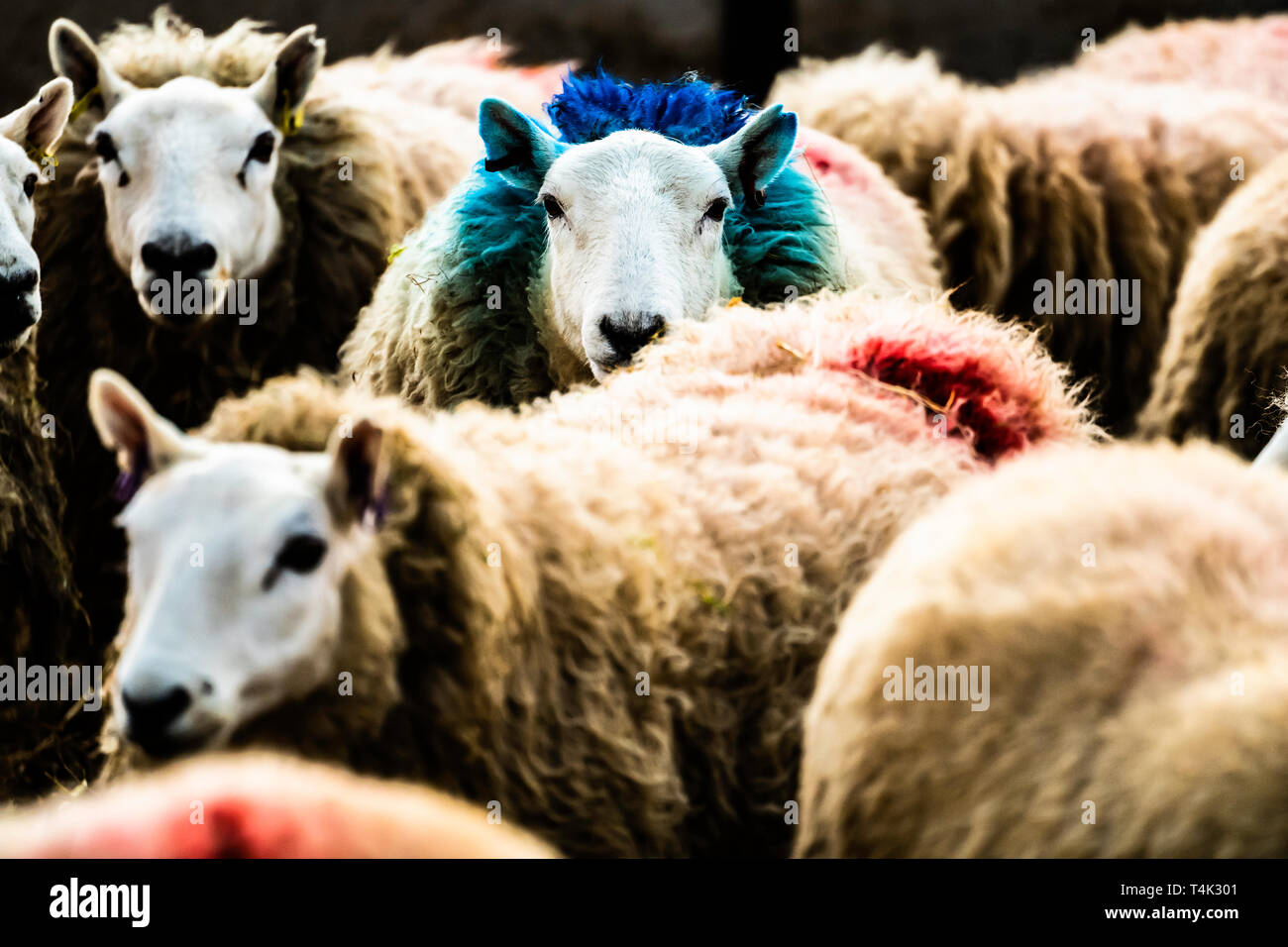 Flock Straw Shed Stock Photos Amp Flock Straw Shed Stock