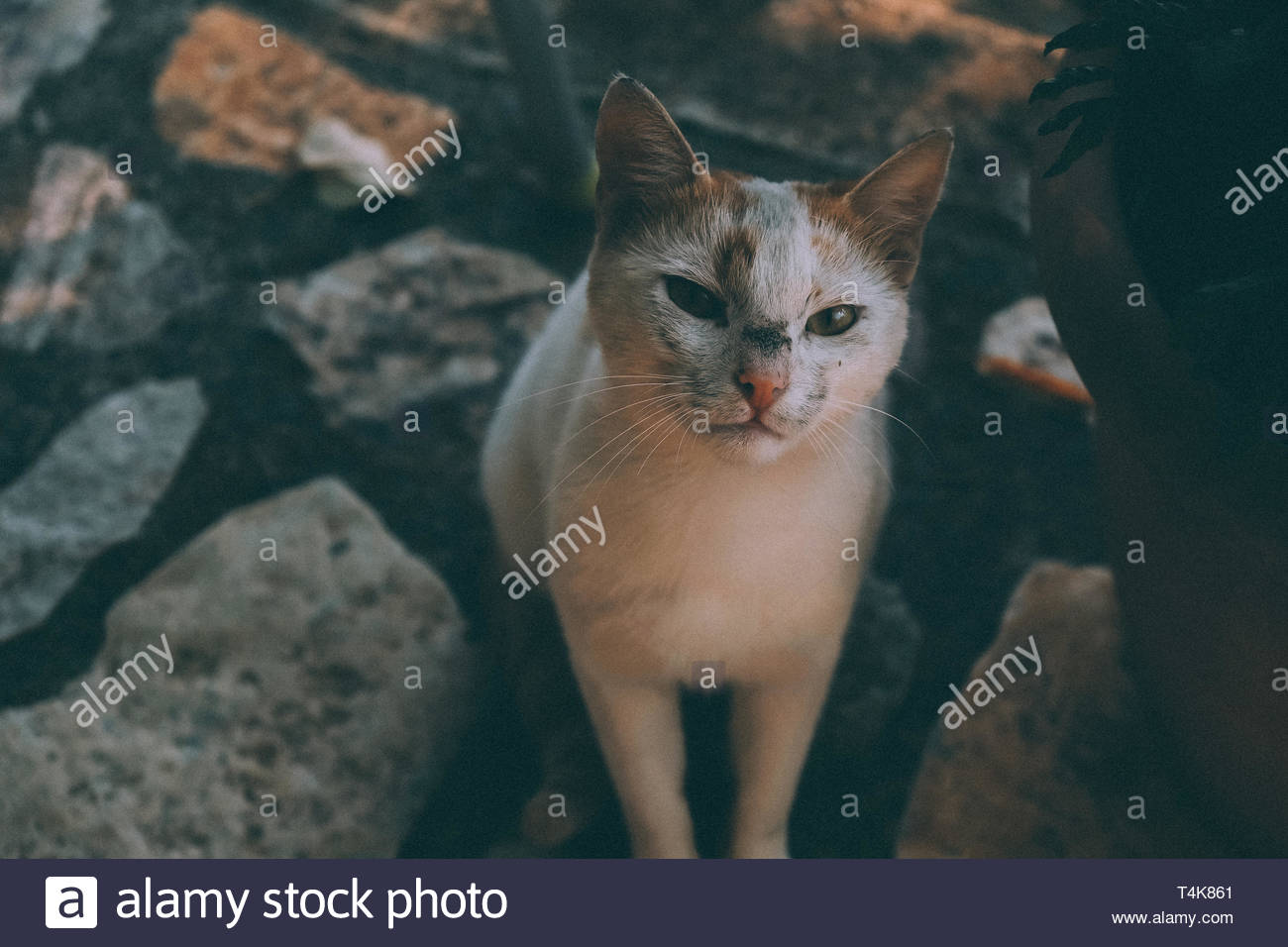cat looking closely - Stock Image
