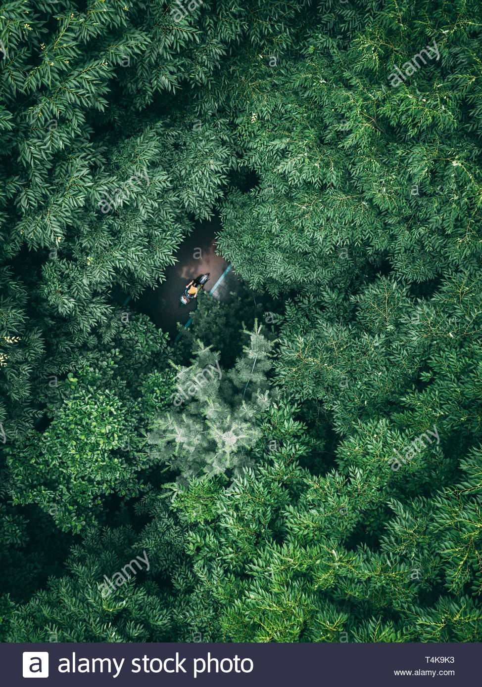 aerial photography of trees - Stock Image