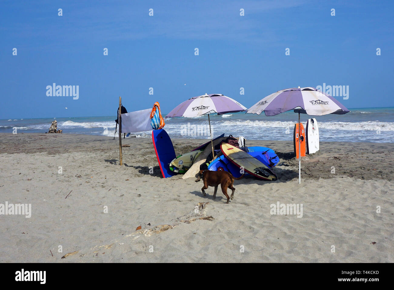 Sunny Beach Scene with Sun Umbrellas, Surfboards and Bodyboards - Stock Image