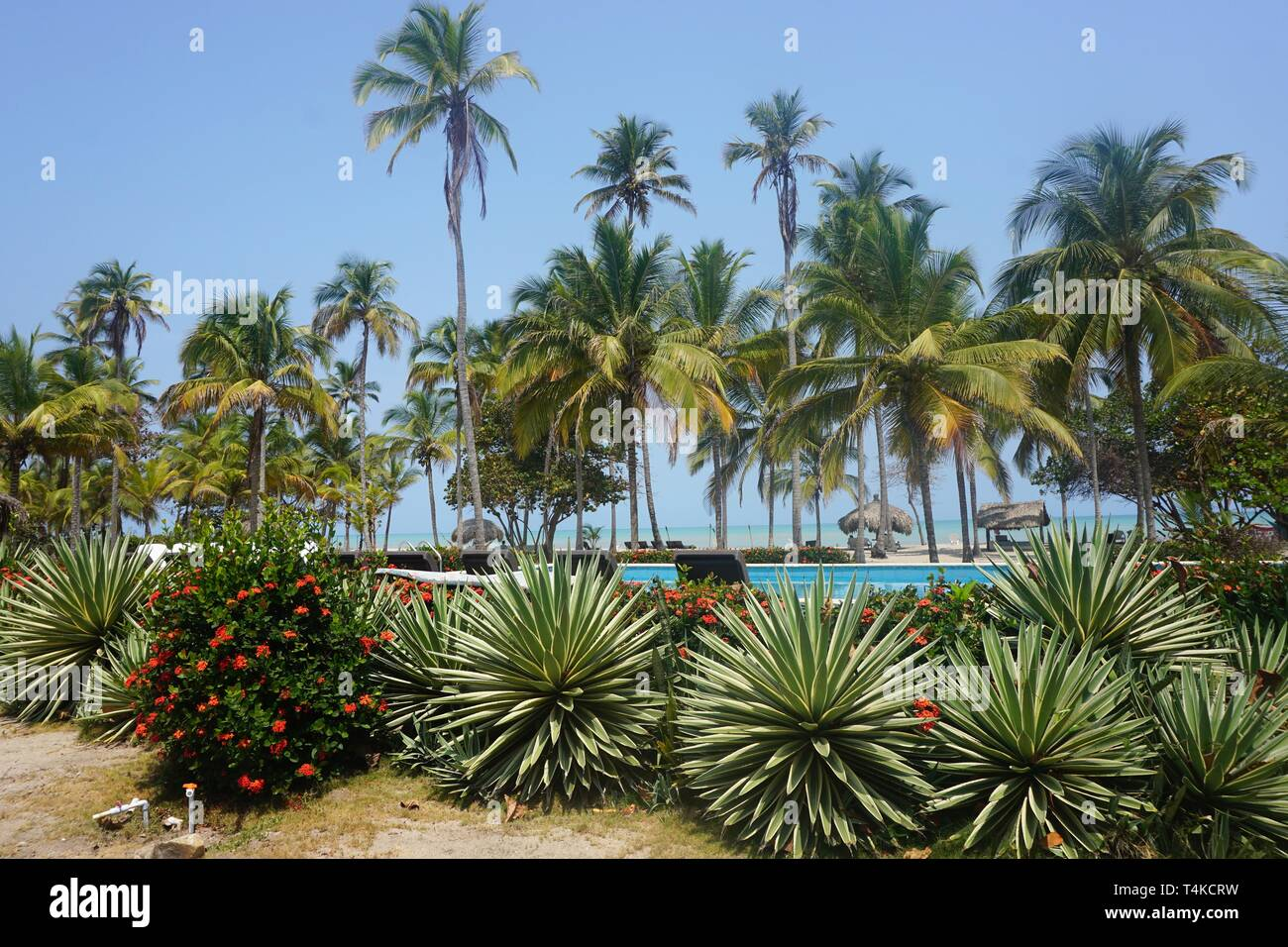 Picture Postcard View through Palm Trees towards the Caribbean Sea - Stock Image