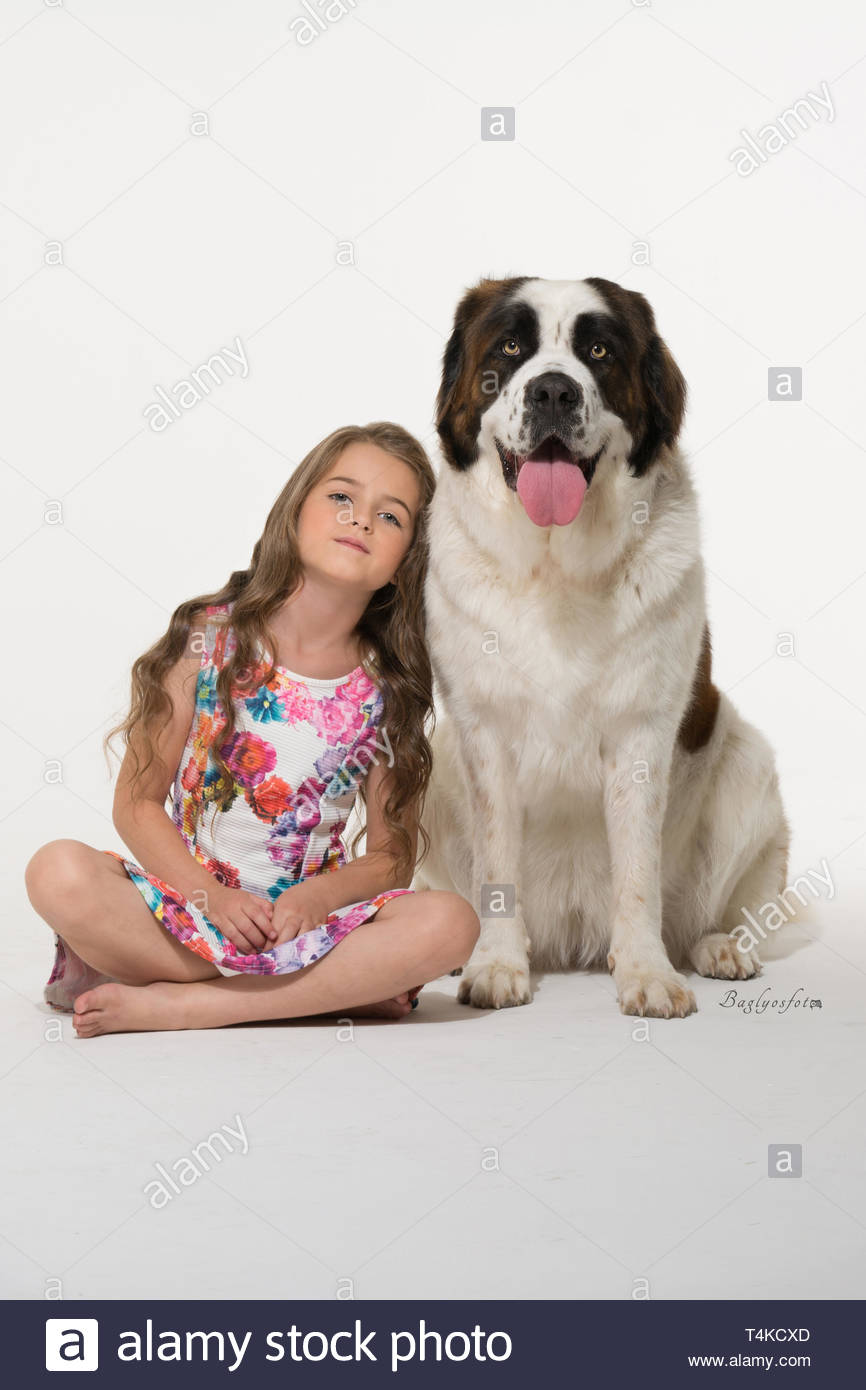 girl sitting beside adult white and red Saint Bernard Stock Photo