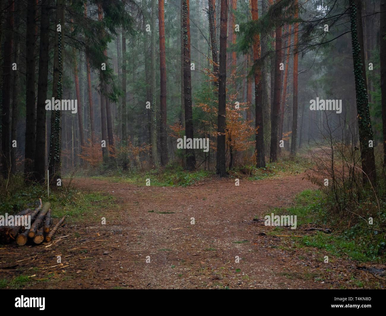 Forest track in autumn - Stock Image