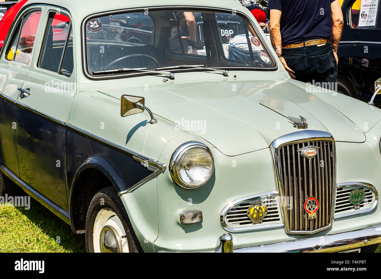 A 1950's Wolsely 1500 on display at a car show - Stock Image