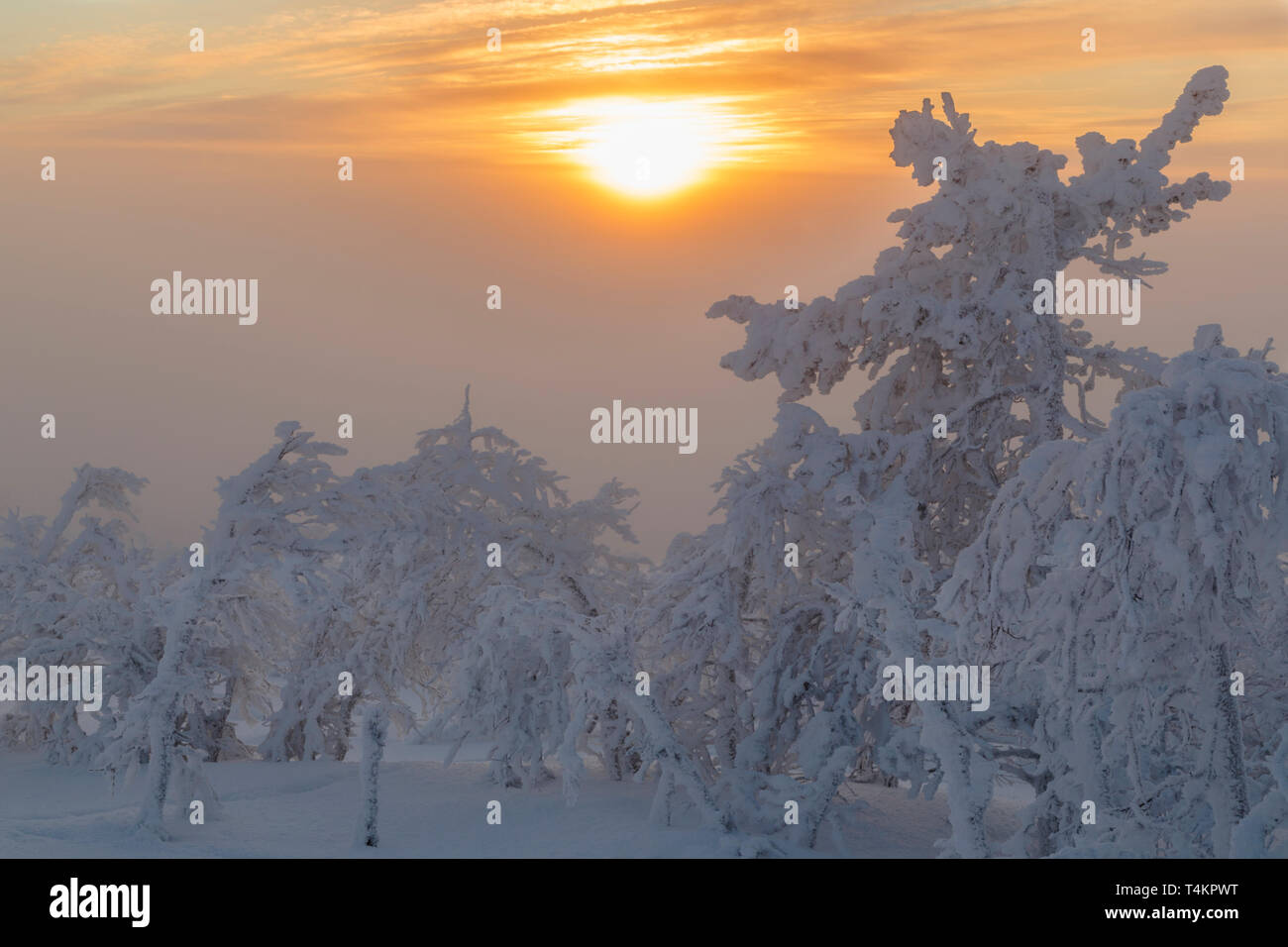 Landscape in winter season, sun behind clouds making the sky orange, nice colorful sky, Gällivare county, Swedish Lapland, Sweden - Stock Image