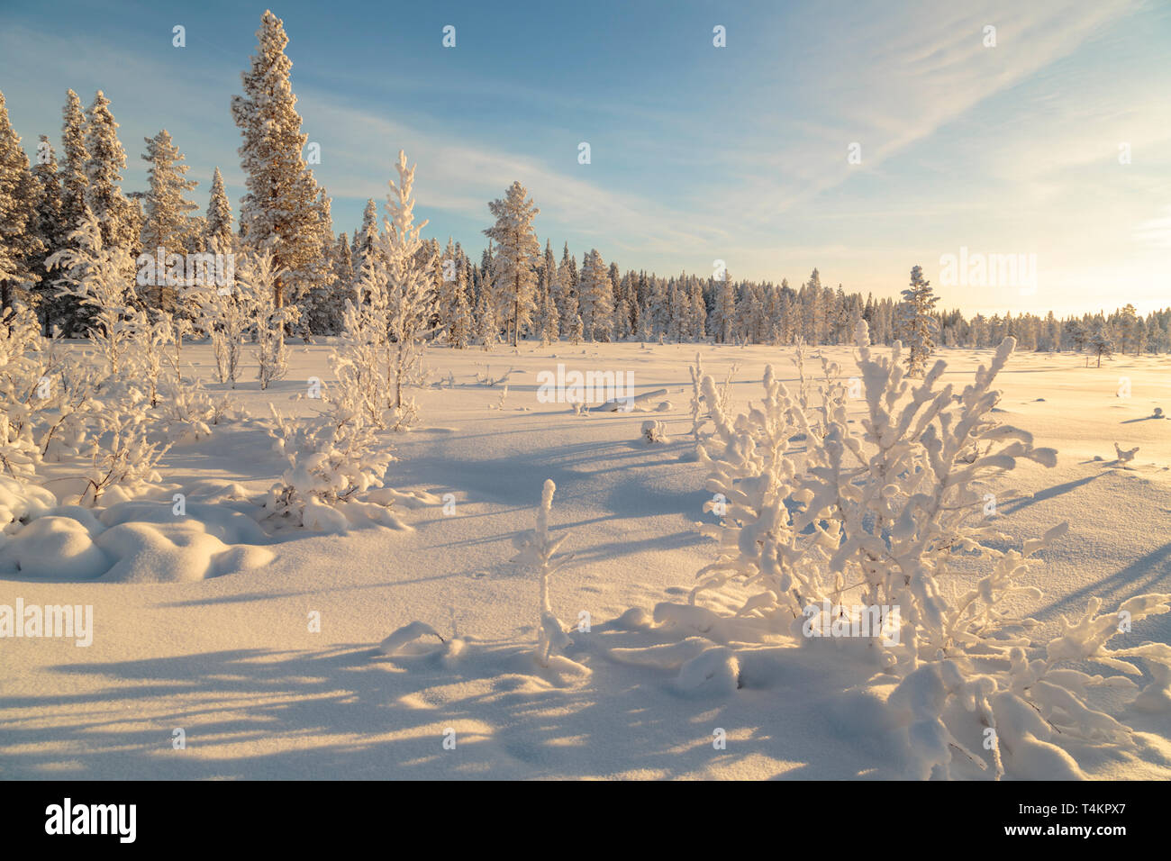 Landscape in winter season, nice warm afternoon light with clear blue sky, Gällivare county, Swedish Lapland, Sweden - Stock Image