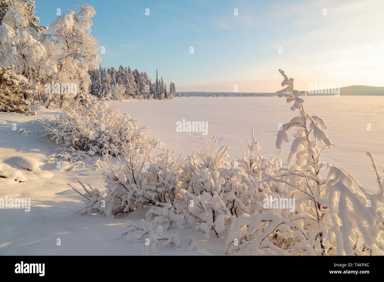 Landscape in winter season, nice warm afternoon light,  snowy trees,  mountain in background, Gällivare county, Swedish Lapland, Sweden Stock Photo