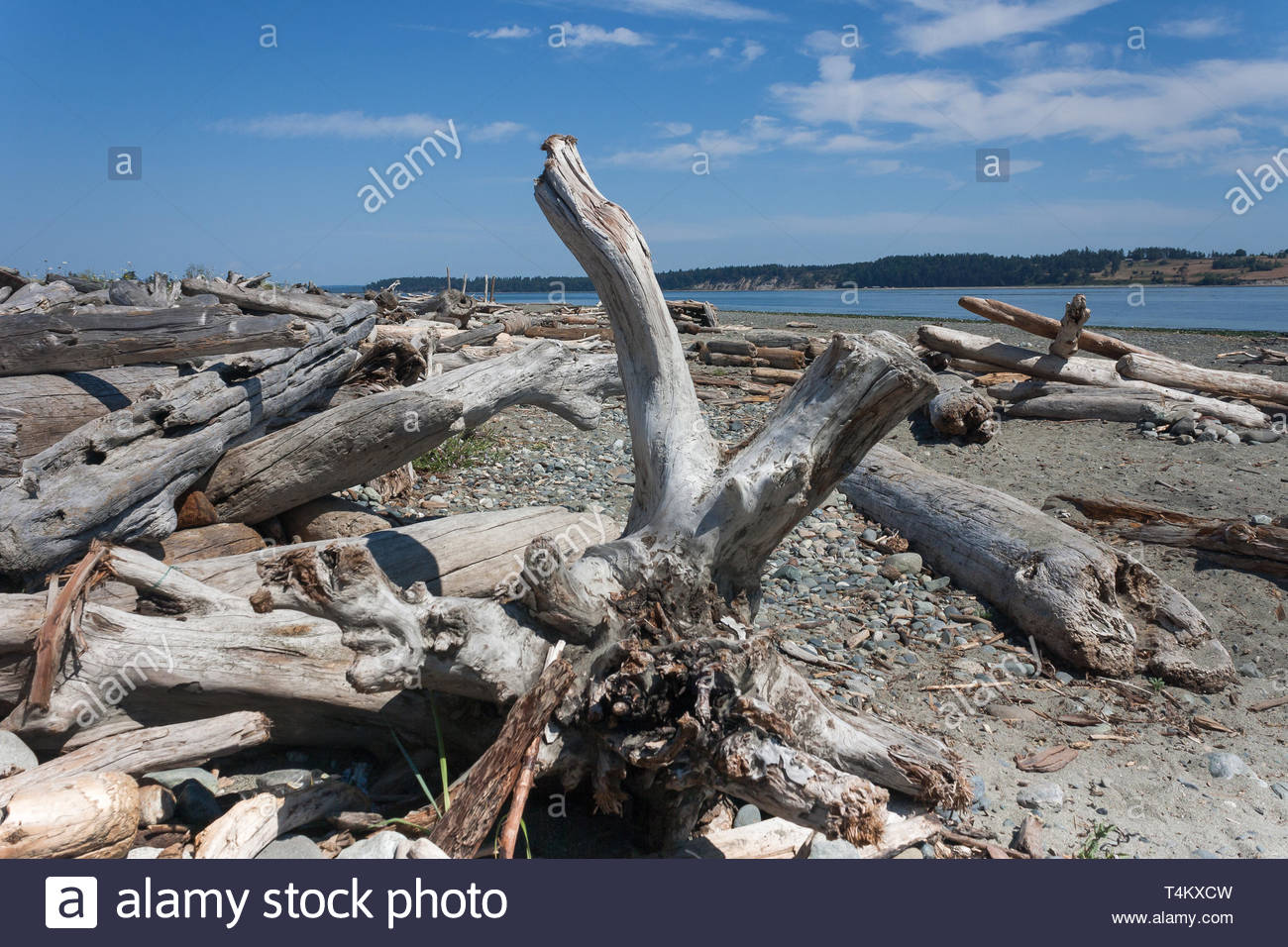 Driftwood washed ashore on Island View Beach on Vancouver Island, British Columbia, Canada - Stock Image