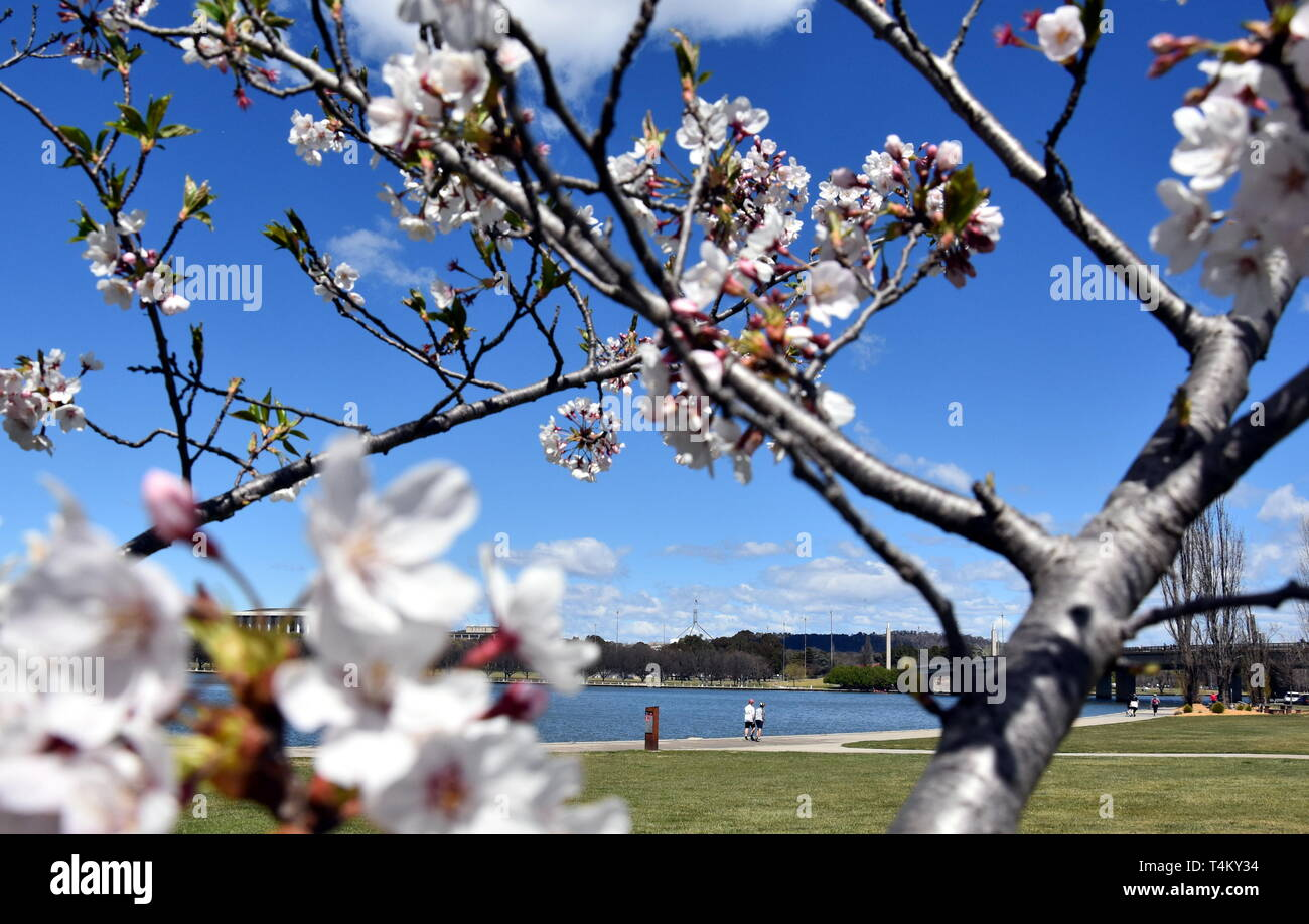 Australian Cherry Tree High Resolution Stock Photography And Images Alamy
