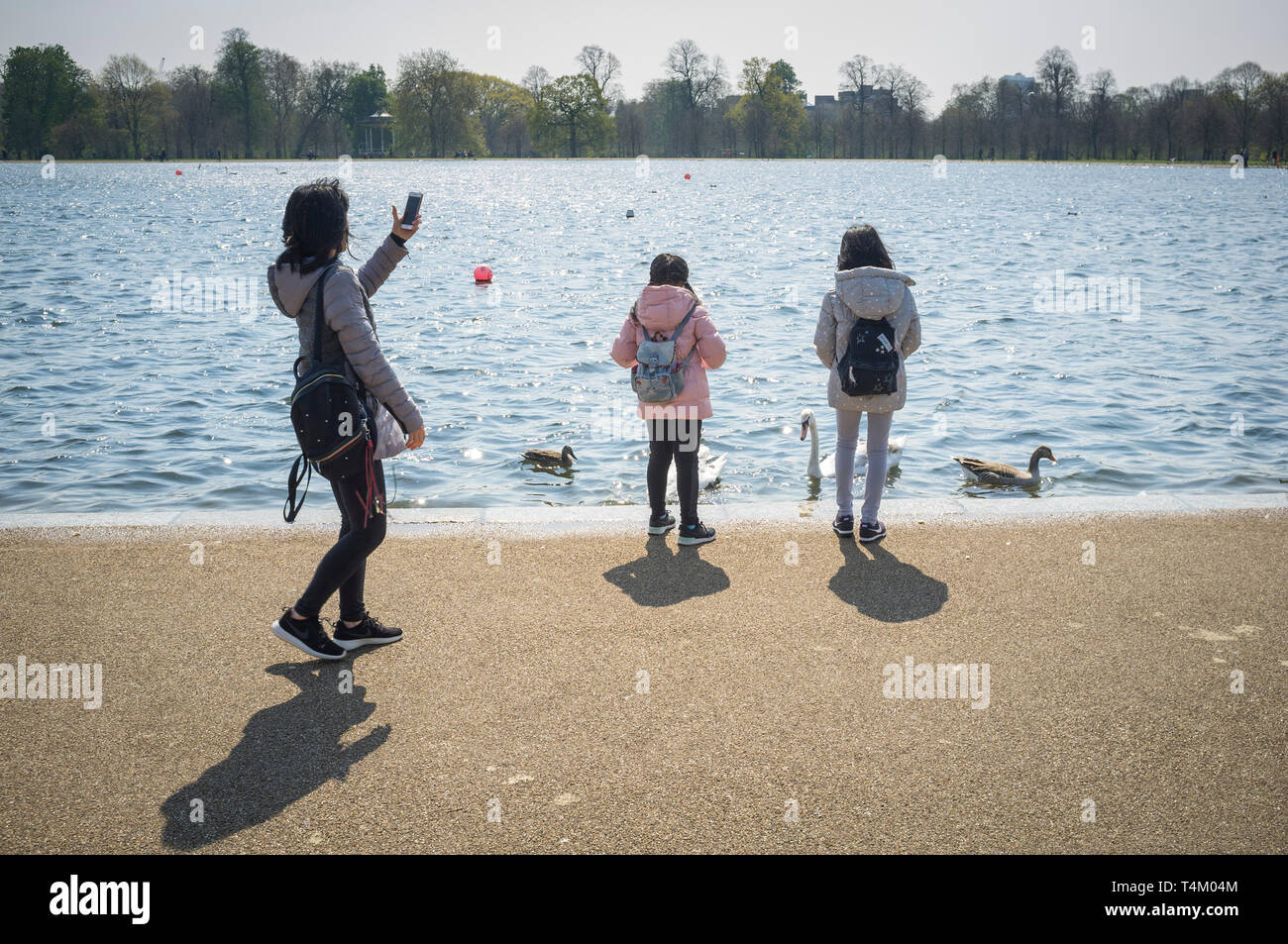 Two children feed the swans and ducks in Round Pond, Hyde Park, London as their mother films on her phone - Stock Image