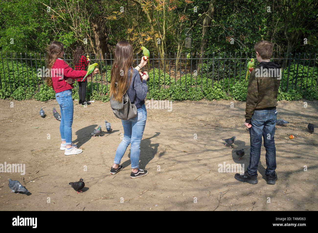 Children pose with tame green Ring-necked Parakeets in Hyde Park, London (Psittacula krameri manillensis) - Stock Image