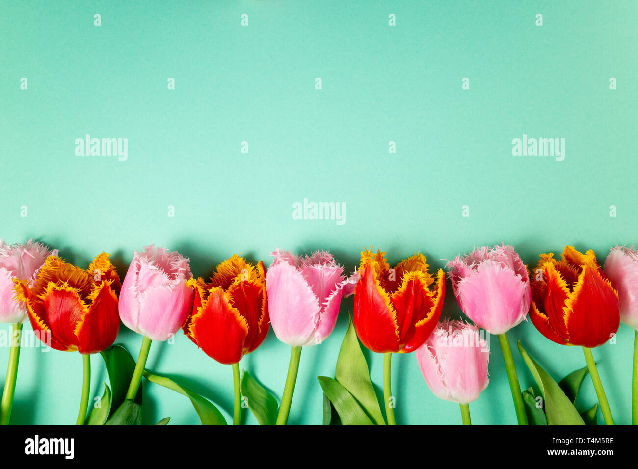 Spring Flowers Bouquet Of Tulips Flowers On Color Background