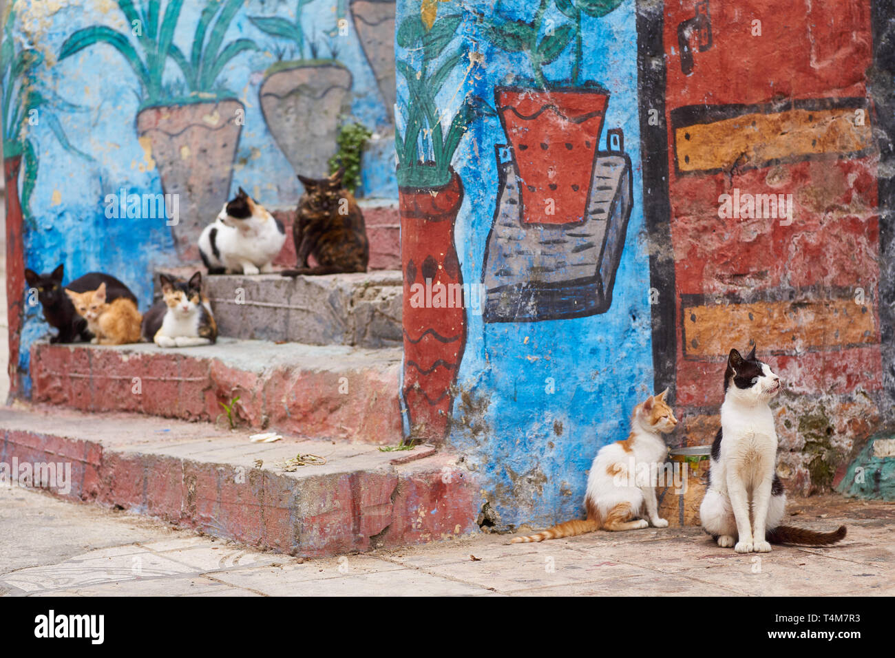 Group of hungry feral cats hanging out in the medina of Tangier, northern Morocco, North-Africa - Stock Image
