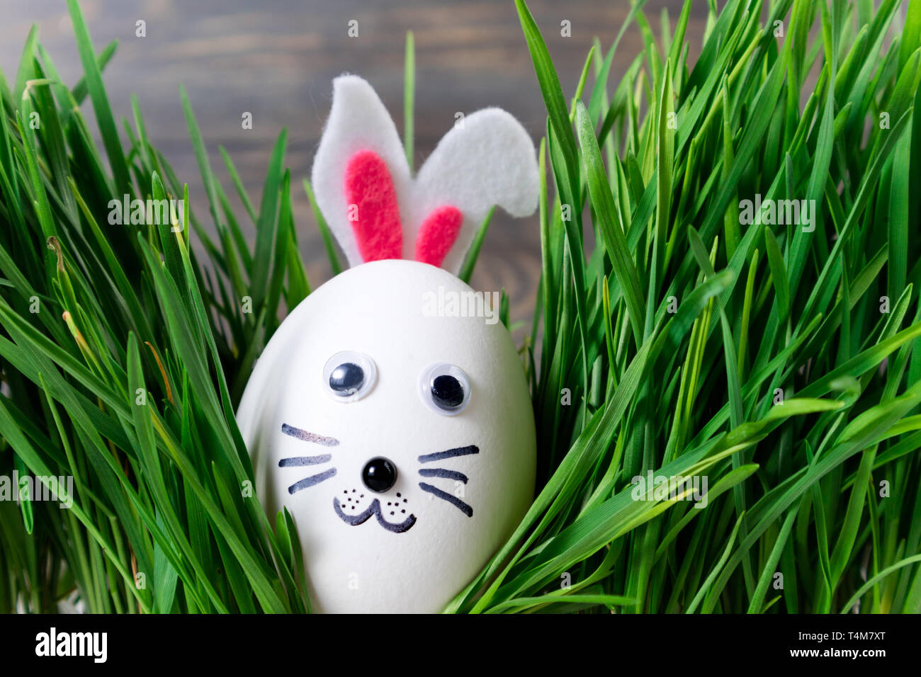 Funny Easter Eggs Cute Bunny In The Grass Happy Easter Background Creative Easter Egg Decoration Ideas With Easter Bunny Stock Photo Alamy