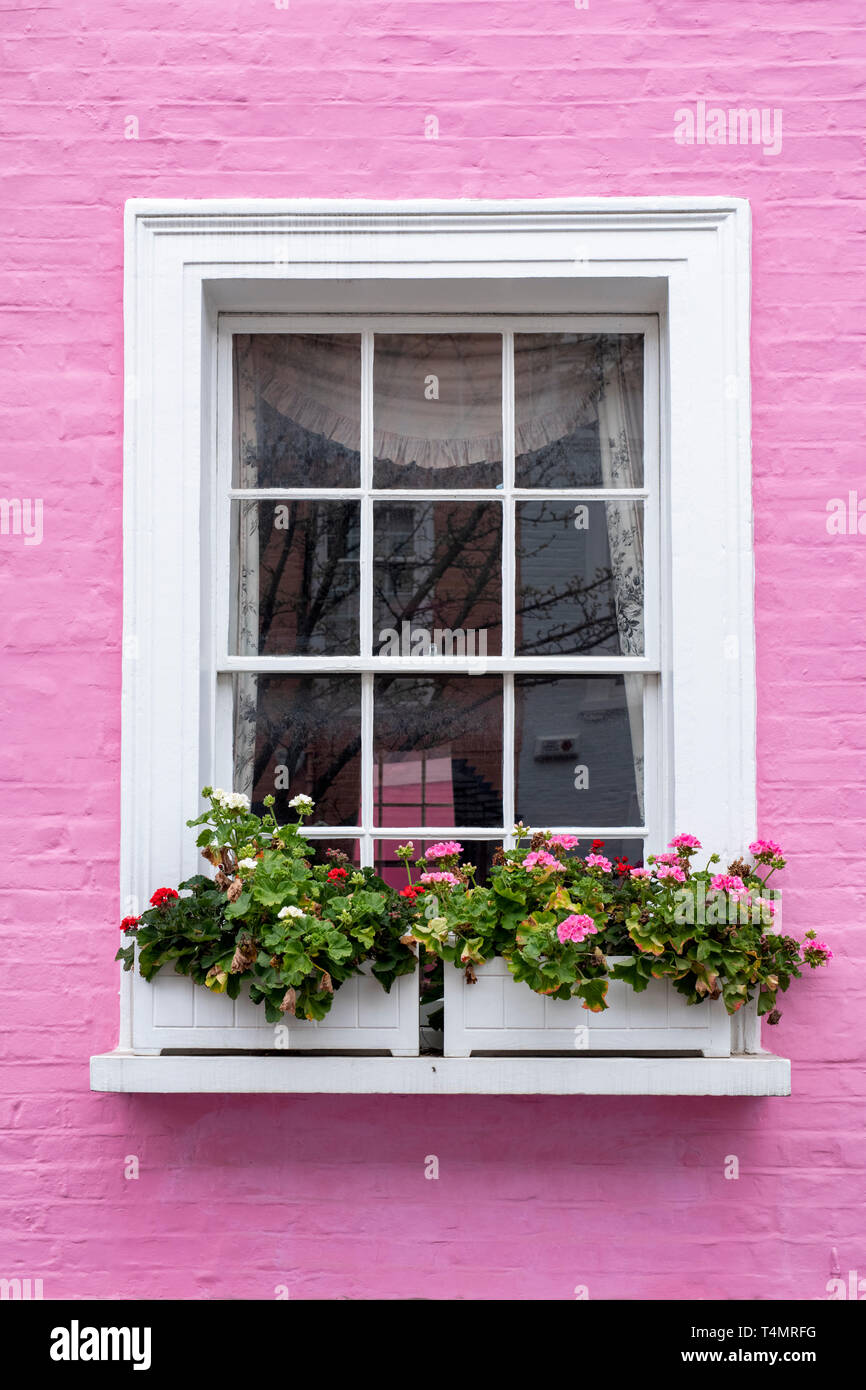 Colourful pink terraced house and window box with pink flowers in Bywater Street, Chelsea, Royal Borough of Kensington and Chelsea, London, England - Stock Image