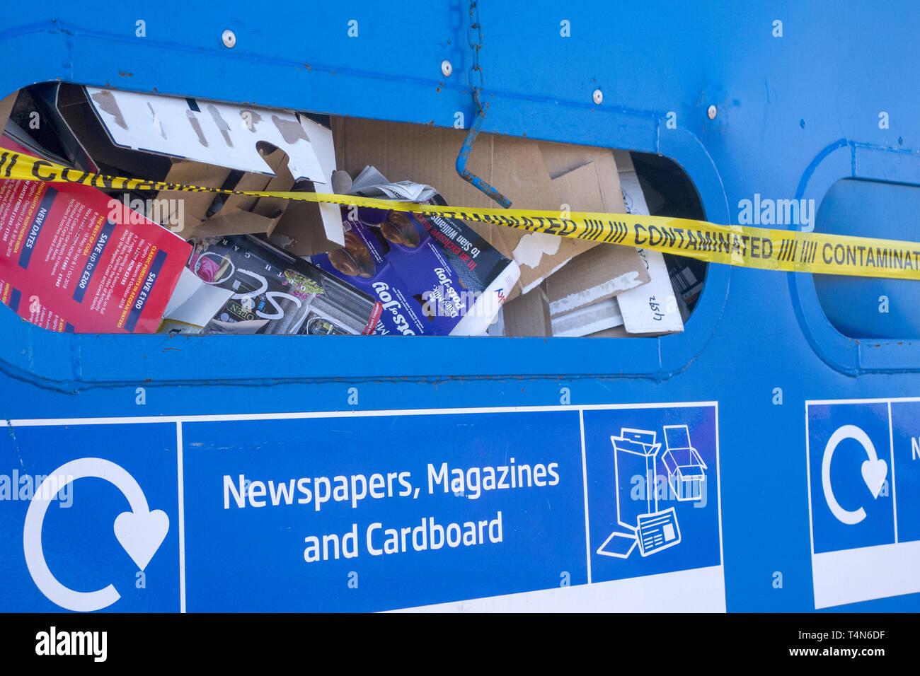 Contaminated recycling bin - Stock Image