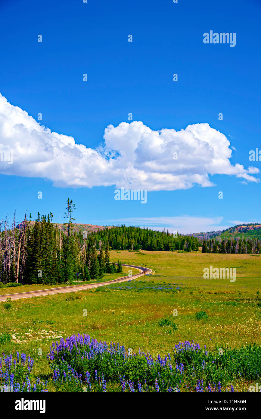 Springtime purple flowers, lush green fields and forest beyond under blue sky with white fluffy clouds. A country road passes through the vgreen valle. Stock Photo