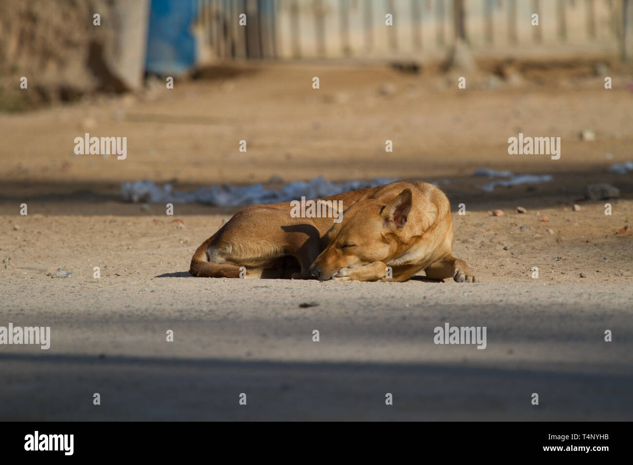 Sleeping Dog in street. Sri Lanka. - Stock Image
