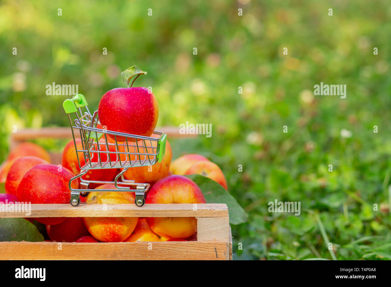 A small trolley for goods with a ripe red apple on the background of a box of apples in the garden. Close-up, space for text. - Stock Image
