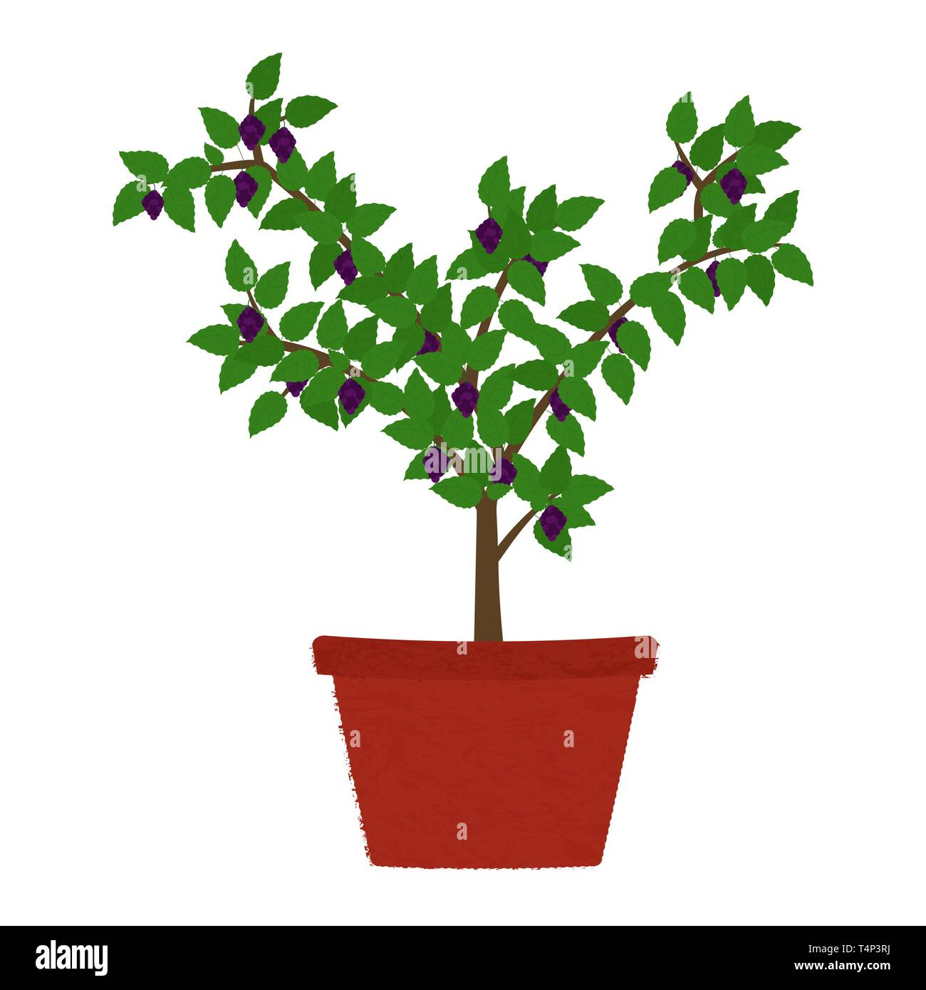 Blackberry fruit tree in clay vase. Isolated. White background. - Stock Vector