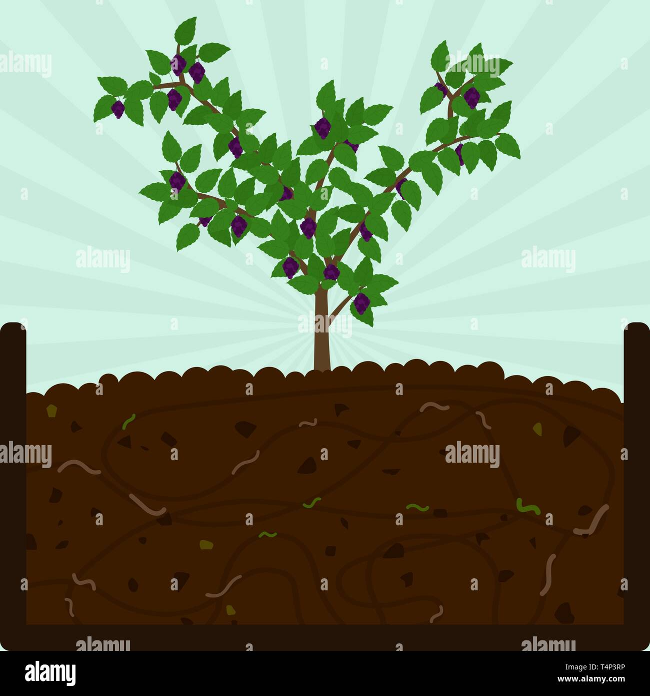 Planting blackberry fruit tree. Composting process with organic matter, microorganisms and earthworms. Fallen leaves on the ground. - Stock Vector