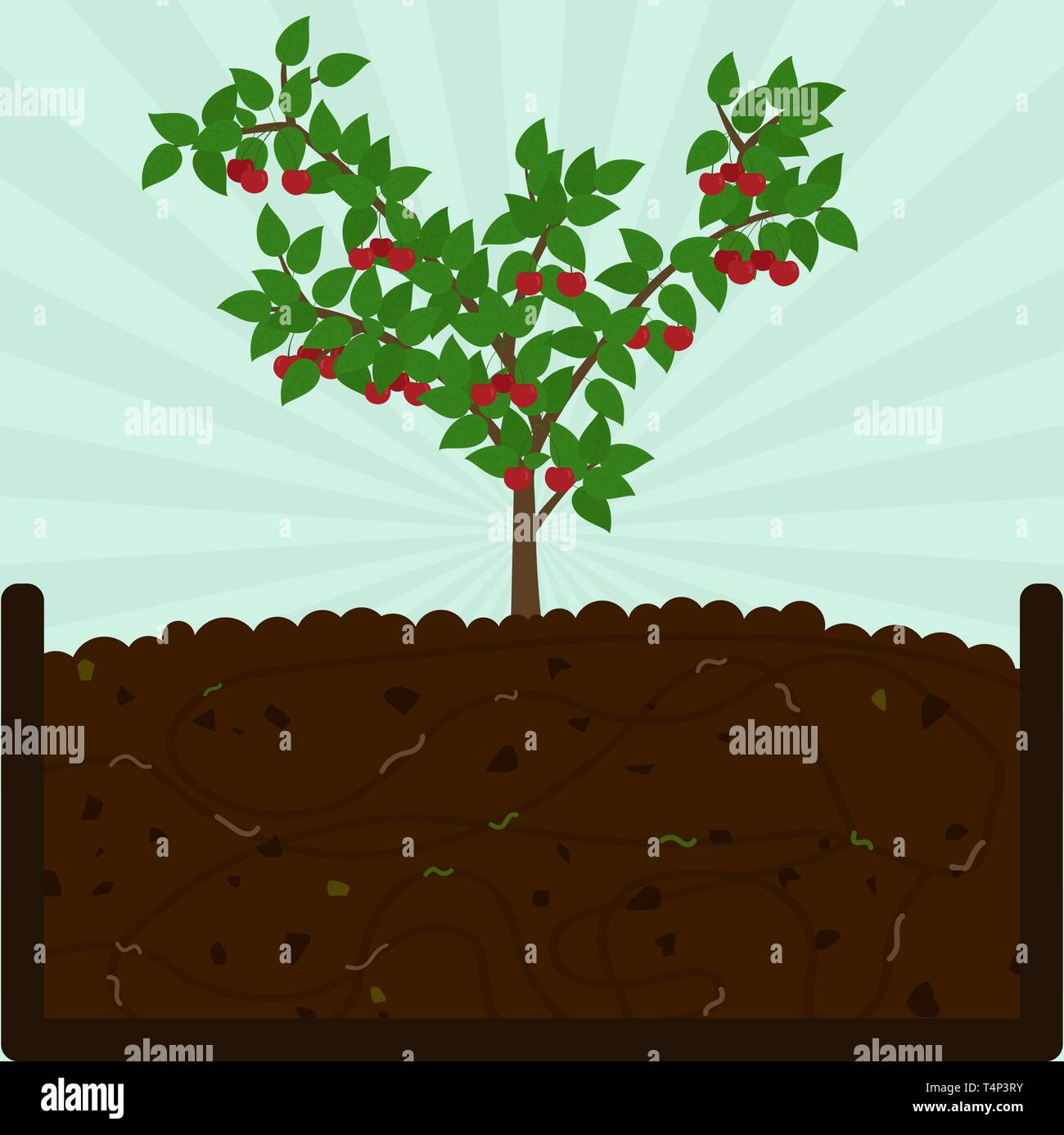 Planting cherry fruit. Composting process with organic matter, microorganisms and earthworms. Fallen leaves on the ground. - Stock Vector