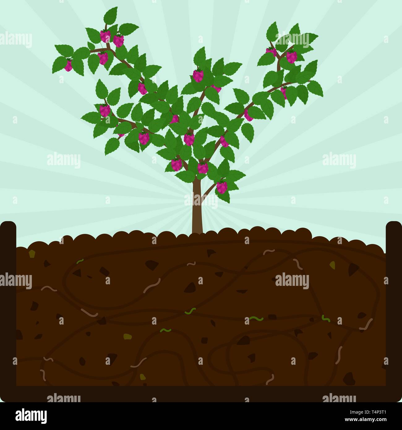 Planting raspberry fruit tree. Composting process with organic matter, microorganisms and earthworms. Fallen leaves on the ground. - Stock Vector